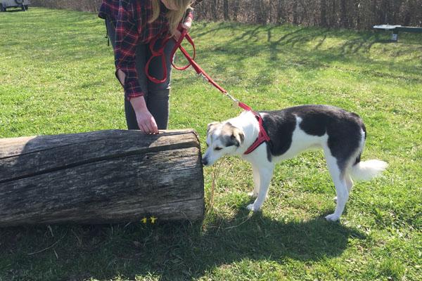 Frühling in der Hundeschule